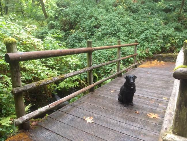 Willow on wooden footbridge