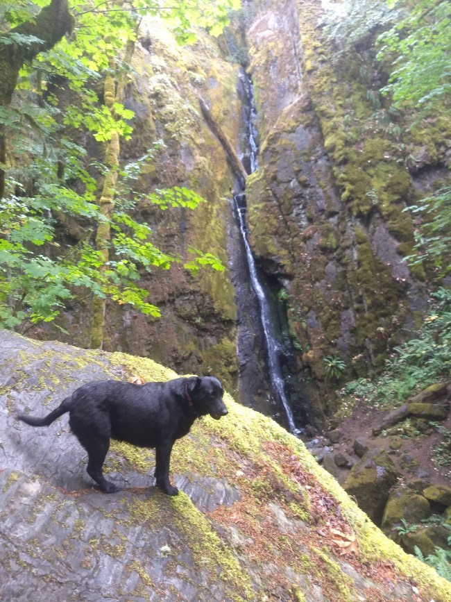 Another shot of Willow standing on the rocks across from Soda Creek Falls