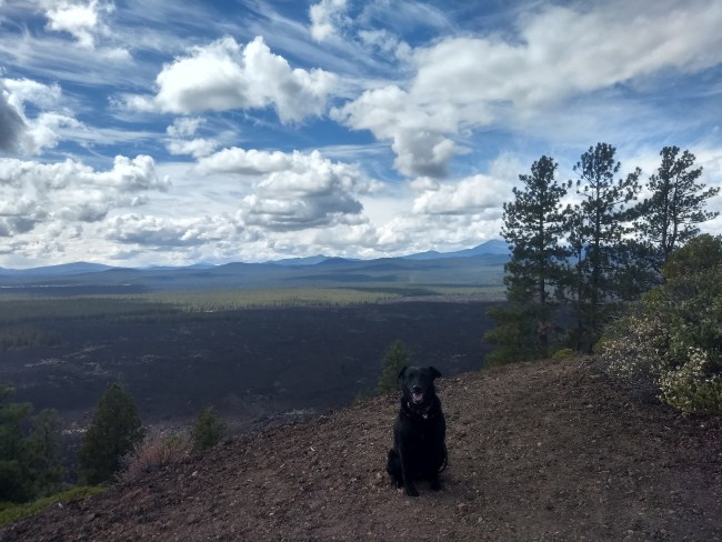 Another view of Willow sitting at the edge of the cinder cone looking out towards the 7000 year old lava flows
