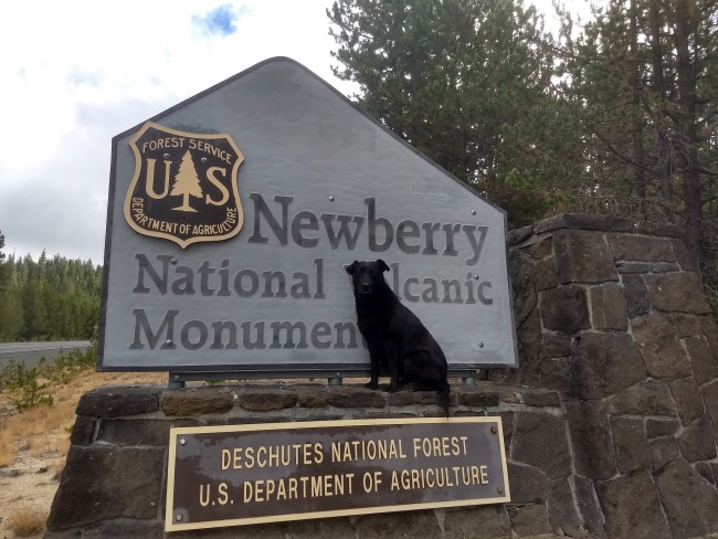 Willow in front of the Newberry Volcanic National Monument sign