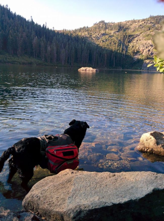 Willow wearing her pack standing in Castle Lake
