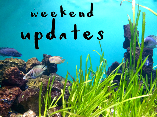 weekend_updates