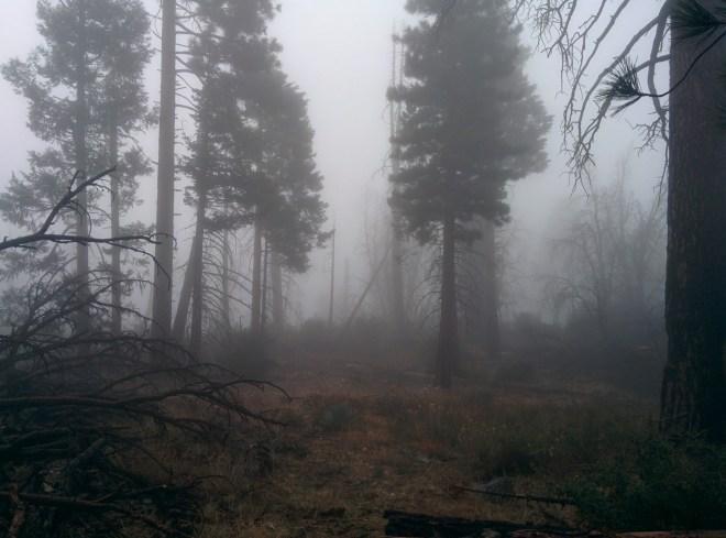Thick wet fog