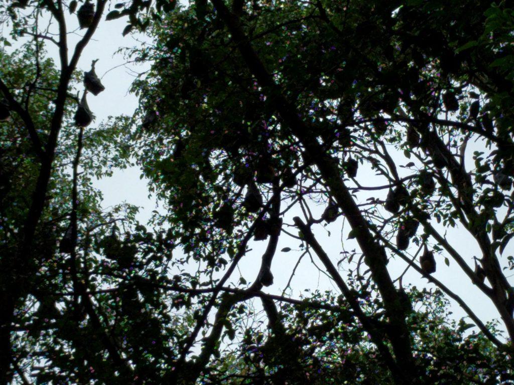 Bat Tree