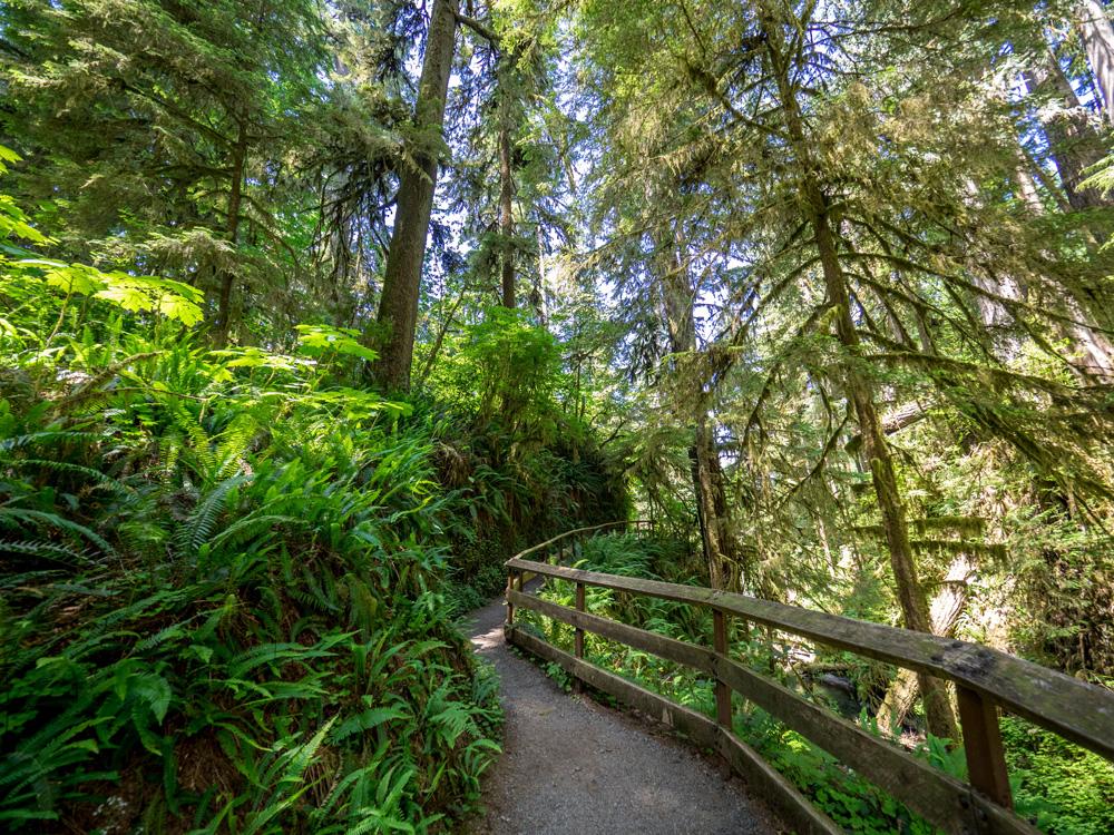 Quinault Nature Trail. www.adventuringbeyond.com