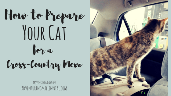Moving Mondays: How to Prepare Your Cat for a Cross Country Move