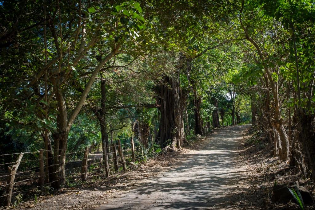 Road to Ojo de Agua Ometepe