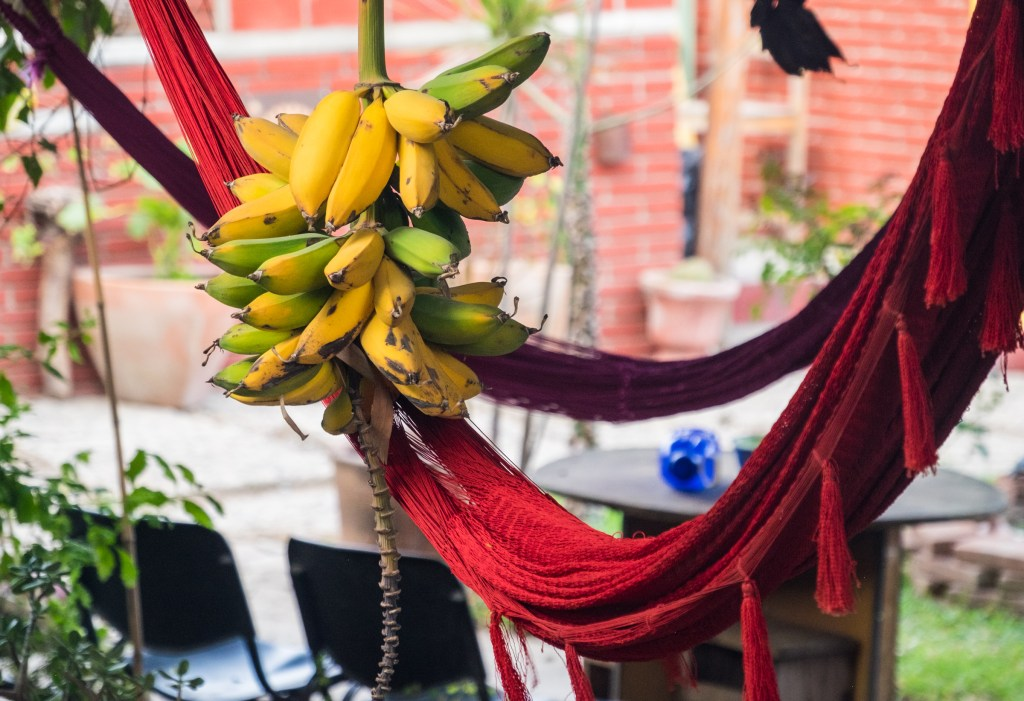 A bright red fabric hammock with tassels; a bunch of several bananas hangs off it.