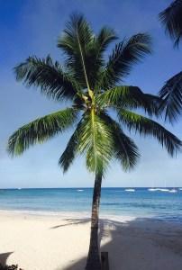 palm barbados