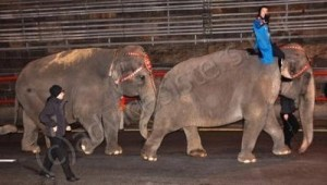 Elephant Walk 2009 at 12:40 a.m.