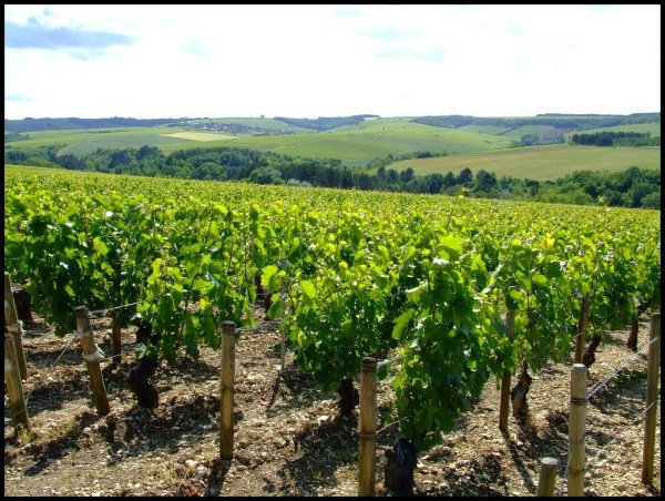 "Chablis? What's in a Name? Chablis is a Wine of ""Place"""