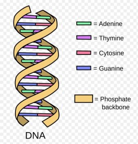 4 strands of dna with words
