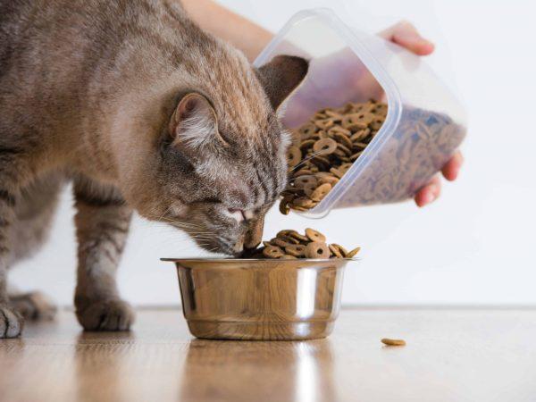 Katten houden er niet van als je hun droge kattenvoer bevochtigd. Ook houden ze niet van vuil water.  (Bron: Alena Ozerova: 46423368/ 123rf.com)