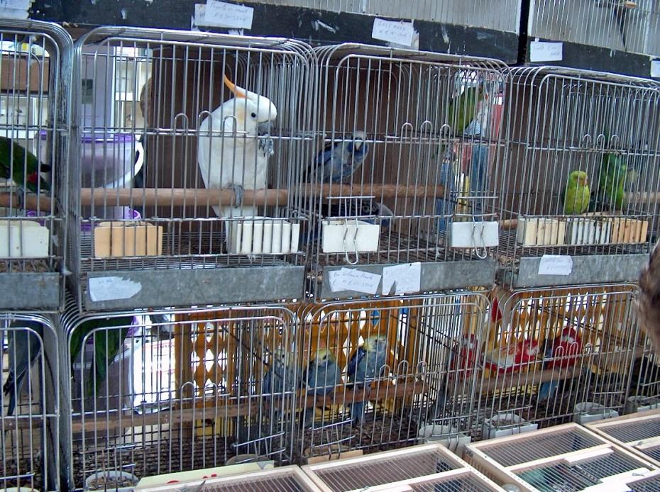 Stop vogelmarkten! Ze zijn niet meer van deze tijd
