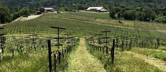 Skinner Vineyards & Winery: Home Again