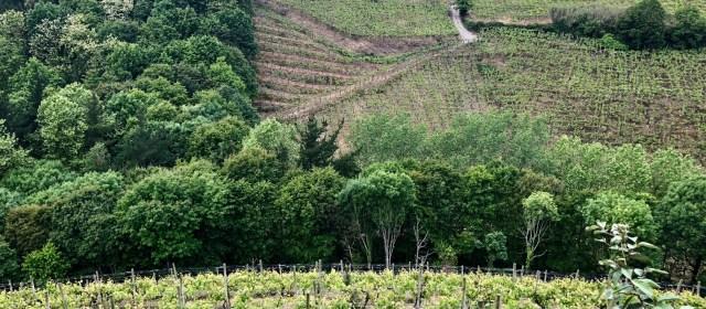 Txomin Etxaniz: The Pride of Basque
