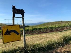 Wildcat Vineyard