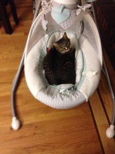 "Meet Elisa's cat Sherlock who is over here like, ""What baby?"""