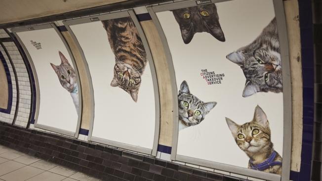 print-metropolitana-londra-cats-not-ads