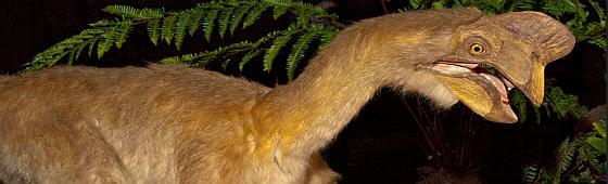 Encuentran en Calahorra una nueva especie del Cretácico Superior