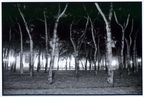 Midnight Illuminated