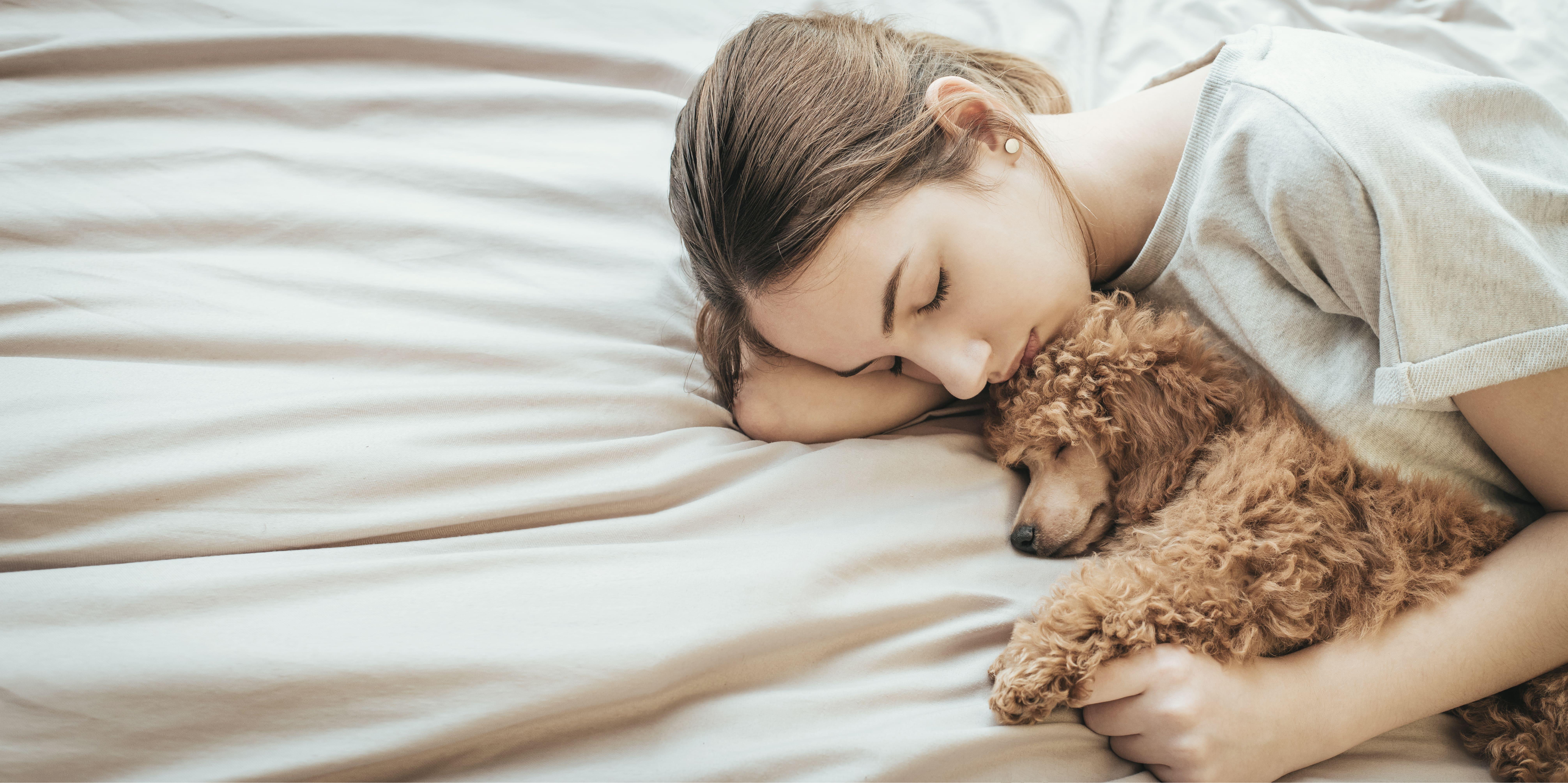 犬 一緒に寝る しつけ