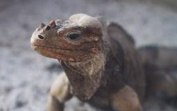 爬虫類が死んでしまったら、ペット霊園で火葬はできる?