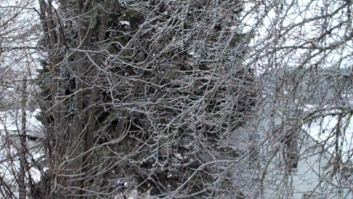 Frozen Rain on tree branches.