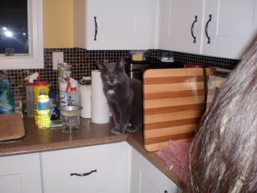 Cat looking grumpy behind the cutting board.