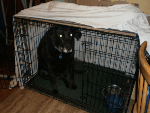 Dog in his crate.