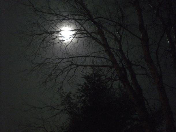Full moon through the trees on Christmas Eve, 2015