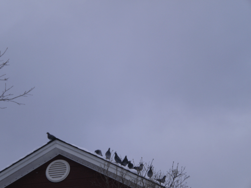 Photo of a grey sky with pigeons on a roof.