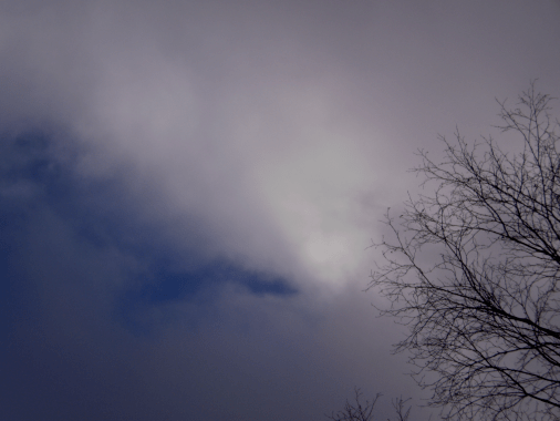 Mostly cloudy sky with bare trees and a little bit of blue.