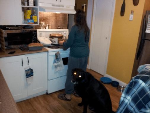 Dog with glowing white eyes.