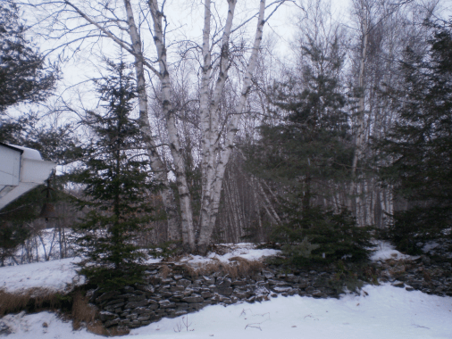 light dusting of snow on trees and stone wall