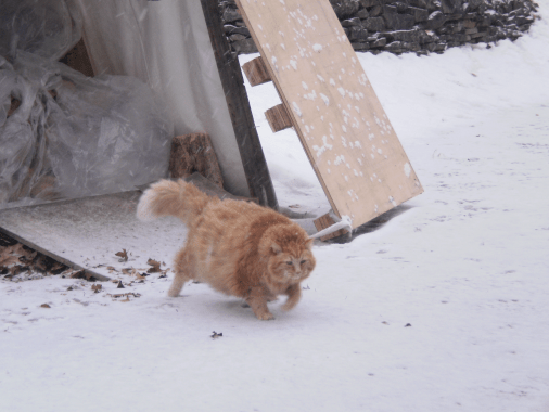 Moe hurrying to the warmth and dry safety of our porch.