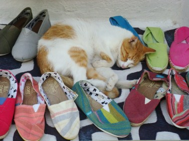 Stray kitty sleeping on a shop display in Paros