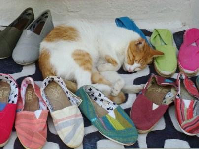 Stray kitty sleeping on a shop display in Paros