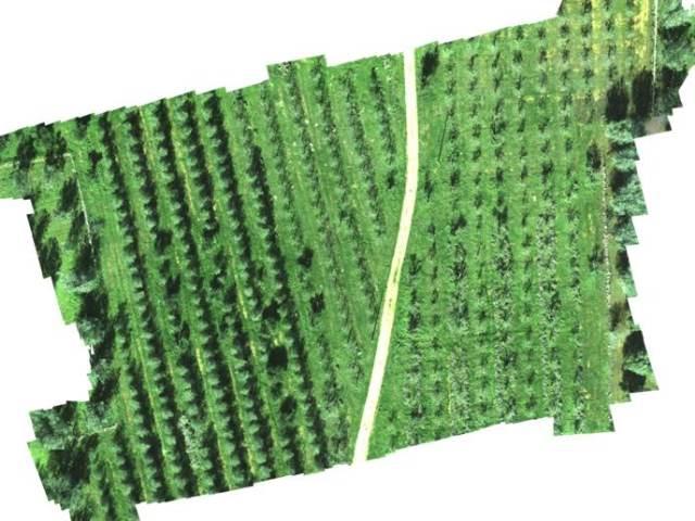 droni per agricoltura - mappatura