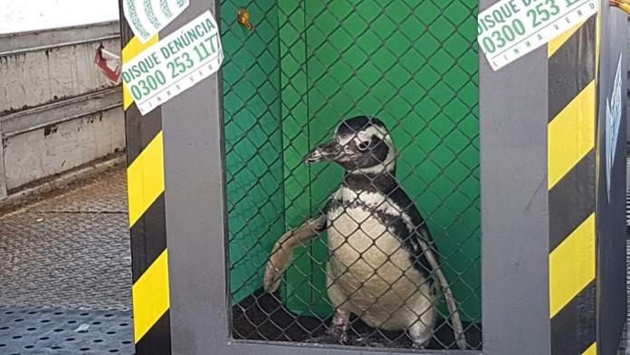 pinguim-latam-cargo-1