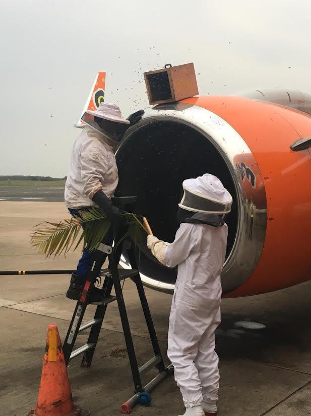Abelhas Motor Avião Mango Airlines