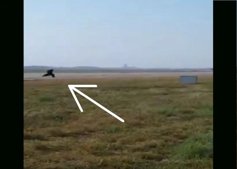 Vídeo Funcionário Aeroporto Vestido Urso Macacos