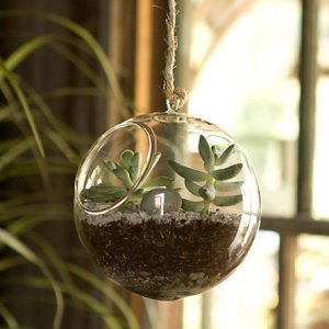 It's called a 'hanging orb terrarium'.