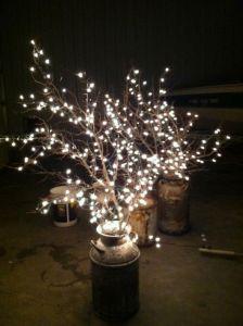 light branch