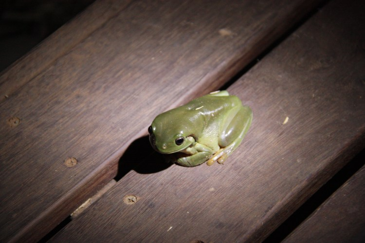 Our little tree frog friend