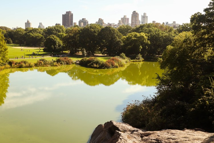 Spend the morning in Central Park in NYC