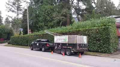 Aesthetic-Tree-Truck