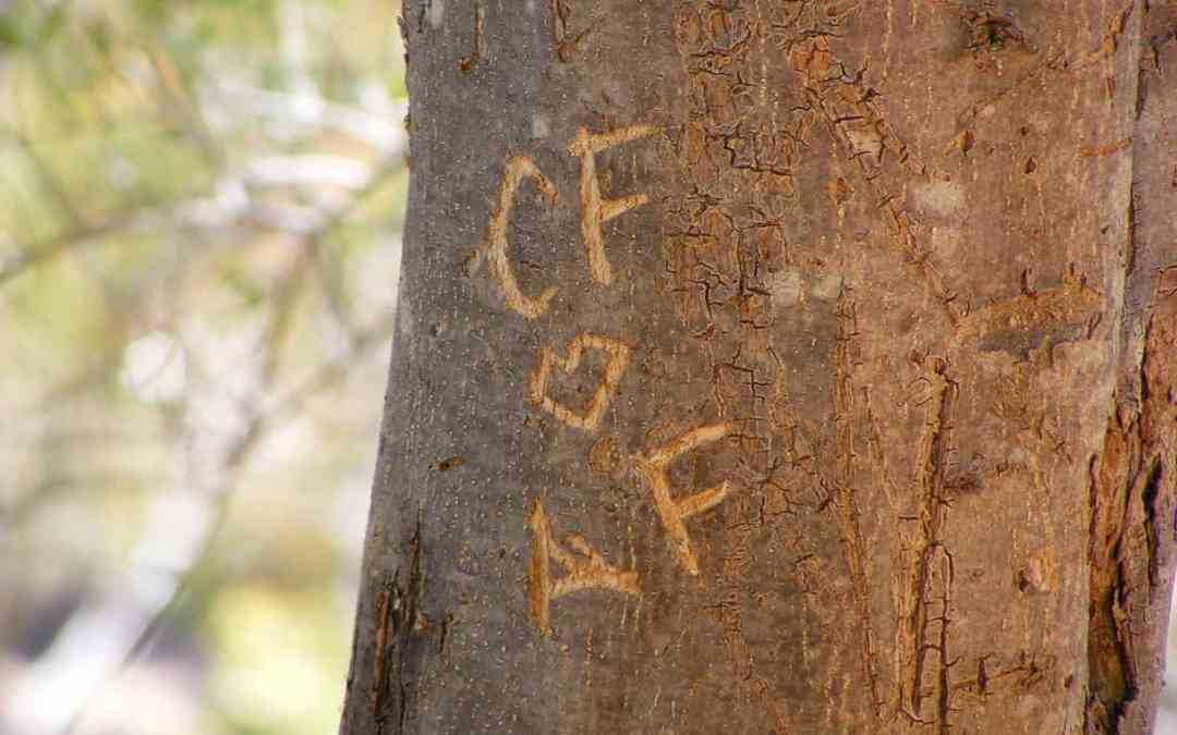 That Permanent Marker You Have in Your Hand Isn't Cool:  How Vandalism Affects Trees in Burnaby