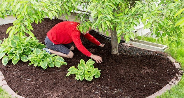 How to properly apply mulching