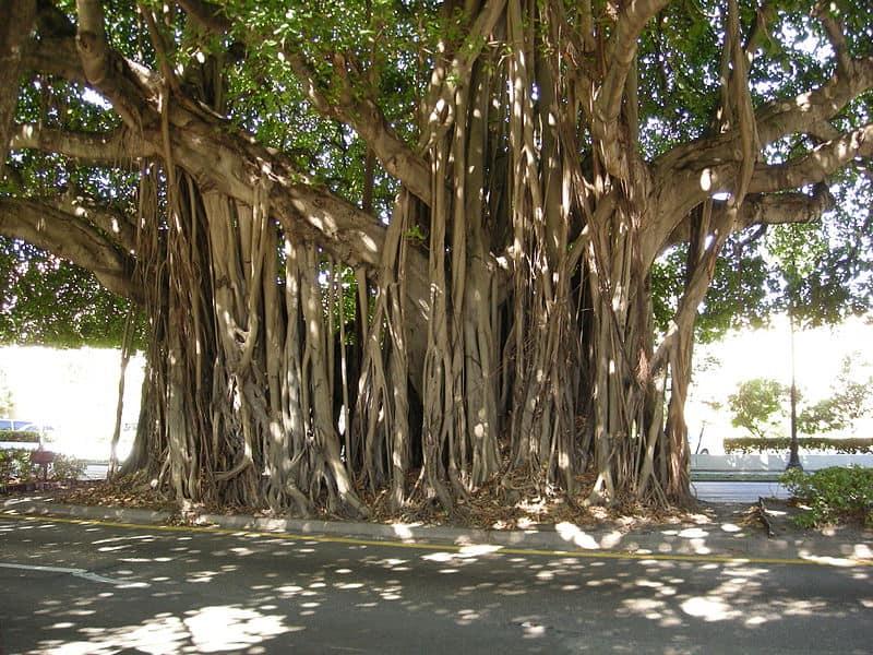 Tree Overgrow